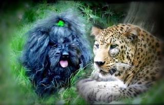 Commander Ralph and Boris the Amur Leopard