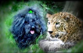 Commander Ralph and Boris the Amur Leopard