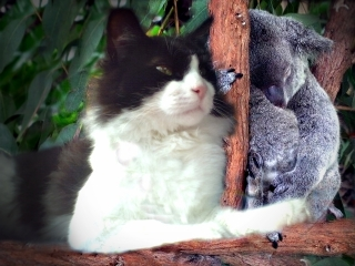 Commander Zorro and Mathlid Koala